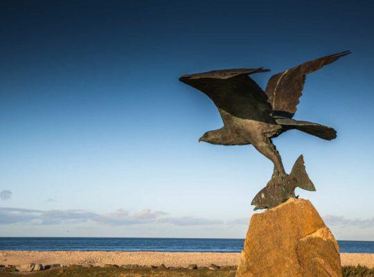 El ave rapaz de Spey Bay